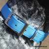 Close up Zenzi wearing her Coastal Pet Double Ply Standard Nylon Dog Collar Personalized (2901E) Blue Lagoon BLL