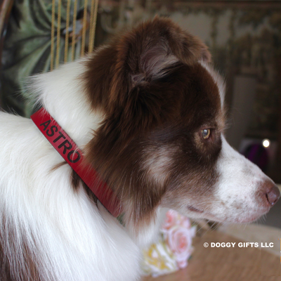 Astro loves wearing his Coastal Pet leather personalized dog collar