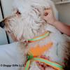 hamilton wearing coastal pet pro reflective personalized collar and leash close up