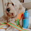 hammy and his personalized coastal pet pro reflective leash and collar and harness