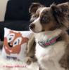Nova wearing Coastal Pet Attire Pro Reflective Adjustable Dog Collar