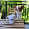Nova is ready for her morning coffee wearing Coastal Pet Pro Reflective Collar