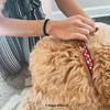 Mylo wearing Coastal Pet Ribbon Dog Collar Close Up