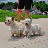 Coastal Pet 2 Dog Adjustable Nylon Coupler With Dogs Red