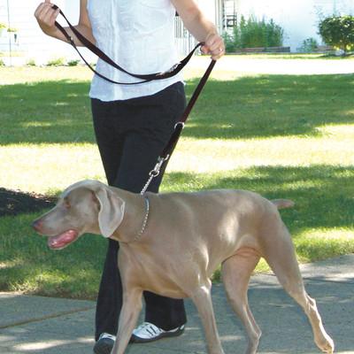 Coastal Pet Multi-Function Nylon Dog Leash