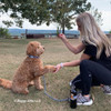 Sammy and Mom Training Session wearing K9 Explorer Collar and rope leash