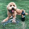 Sammy wearing Coastal Pet K9 Explorer Rope Leash and Collar