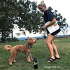 Sammy and Mom Playing In Park Wearing K9 Explorer Collar and Rope Leash