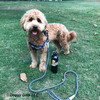 Sammy wearing K9 Explorer Rope Leash With Harness