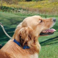 Coastal Pet Adjustable Check Training Collar