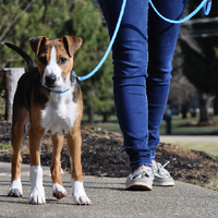 Coastal Pet Sunburst Nylon Dog Collar and Dog Leash Blue Lagoon