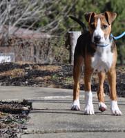 Coastal Pet Sunburst Dog Collar