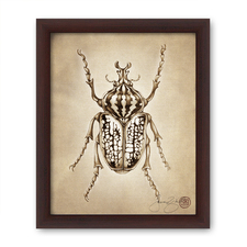 Prints : Goliath Beetle, 8X10 Framed