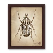 Prints : Goliath Beetle, 8X10 Framed