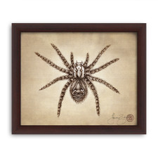 Prints : Tarantula, 8X10 Framed