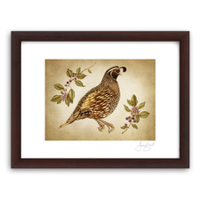 Prints : Quail #1, 11X14 Framed