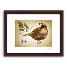 Prints : Quail #4, 11X14 Framed