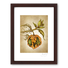 Prints : Warty Gourd, 11X14 Framed