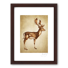 Prints : Fallow Buck, 11X14 Framed