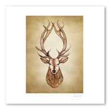 Prints : Red Stag, 11X14 Unframed