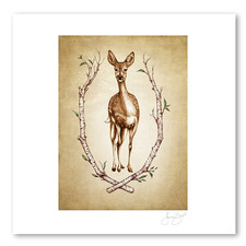 Prints : Fallow Doe, 11X14 Unframed
