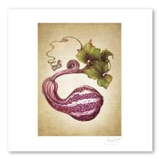 Prints : Curshaw Gourd, 11X14 Unframed