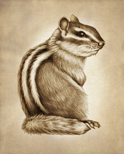 Prints : Chipmunk #3, 8X10 Unframed