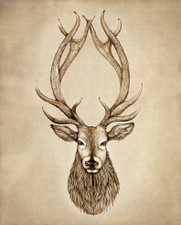 Prints : Red Stag 8X10 Unframed