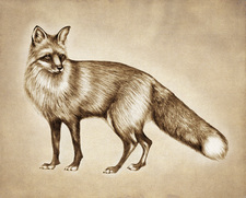 Prints : Red Fox 8X10 Unframed