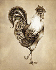 Prints : Rooster 8X10 Unframed