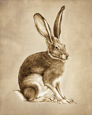 Prints : Sitting Hare 8X10 Unframed
