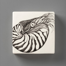 Wall Box: Nautilus Shell