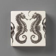 Wall Box: Seahorse