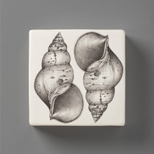 Wall Box: Snail Shell