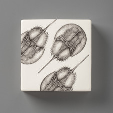 Wall Box: Horseshoe Crab