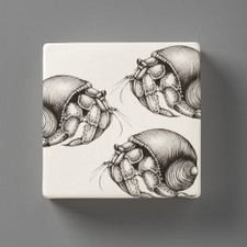 Wall Box: Hermit Crab