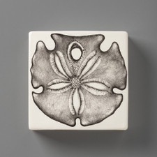 Wall Box: Sand Dollar