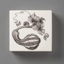 Wall Box: Curshaw Gourd