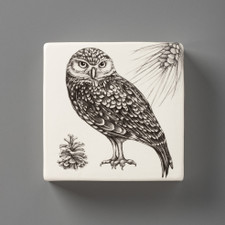 Wall Box: Burrowing Owl