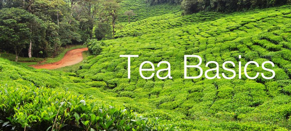 Tea Basics  - a Guide for beginners