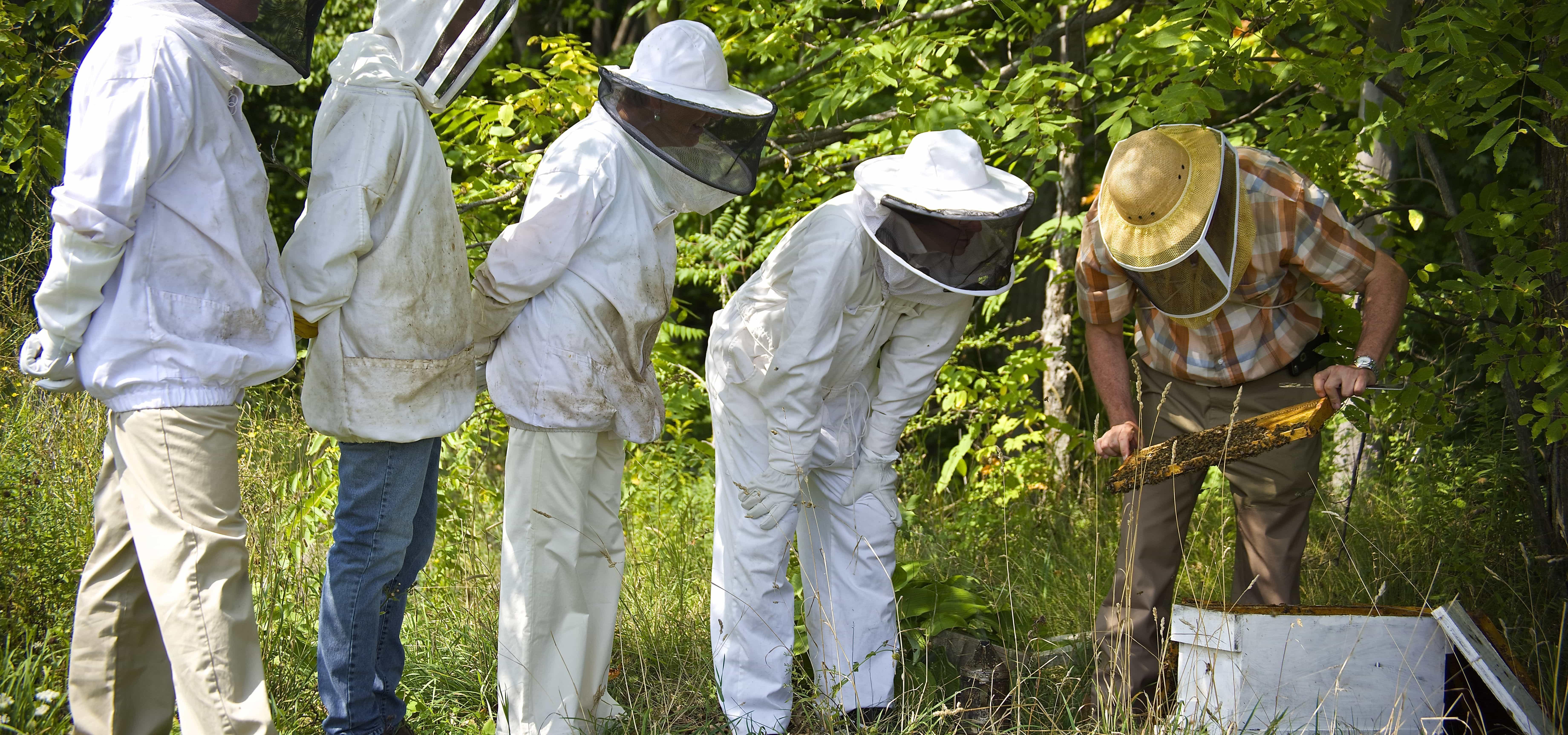 web-beekeeping-4.jpg