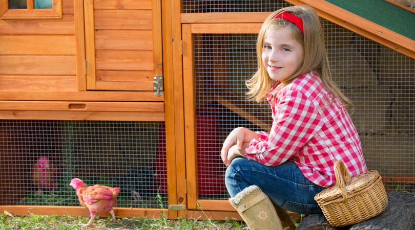 Best ways to clean a chicken coop naturally