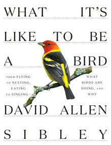 What It's Like to Be a Bird (From Flying to Nesting, Eating to Singing--What Birds Are Doing, and Why) by David Allen Sibley, 9780307957894
