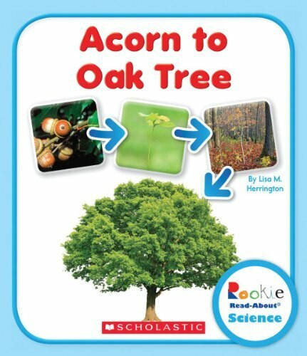 Acorn to Oak Tree (Rookie Read-About Science: Life Cycles) by Lisa M. Herrington, 9780531249758