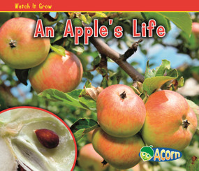 An Apple's Life by Nancy Dickmann, 9781432941505