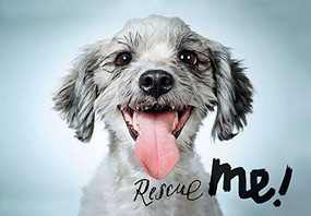 Rescue Me (signed edition) (Dog Adoption Portraits and Stories from New York City) by Richard Phibbs, 9781683952138