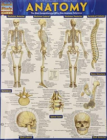 Anatomy - Reference Guide (8.5 x 11) (a QuickStudy reference tool) by Perez, Vincent, 9781423222781