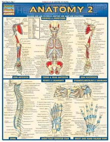Anatomy 2 - Reference Guide (8.5 x 11) (a QuickStudy Reference Tool) by Perez, Vincent, 9781572228566