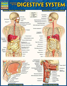 Anatomy of the Digestive System (QuickStudy Laminated Reference Guide) by Perez, Vincent, 9781423234623