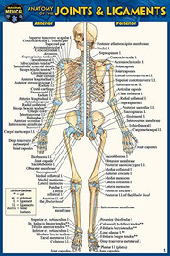 Anatomy of the Joints & Ligaments (Pocket-Sized Edition - 4x6 inches) (Miniature Edition) by Perez, Vincent, 9781423242710